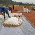 hydroseeder spray grass seed