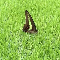 regalfill厂家直销人造草坪足球场环保空心颗粒