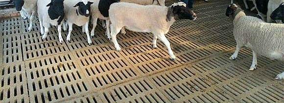 养羊板 4