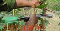 河南葡萄绑枝器 1