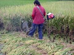 小型水稻收割機批發