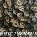 核桃楸籽 1