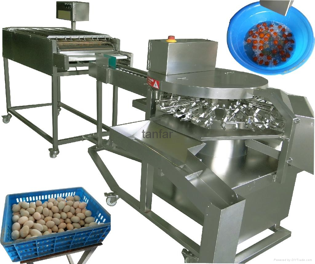 Industrial Food Products : Auto salted duck egg breaker tf tanfar hong kong