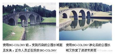 河道生態修復劑 2