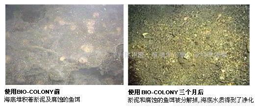 河道生態修復劑 4