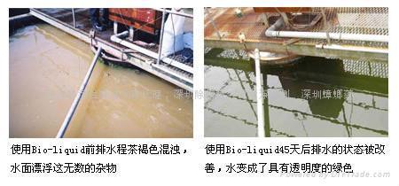 河道生態修復劑 5