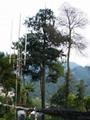 仿生塔 9-60米
