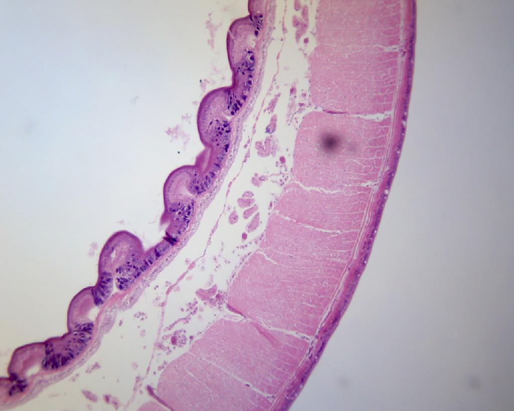 BestScope Binocular Digital Microscope BS-2010BD  2