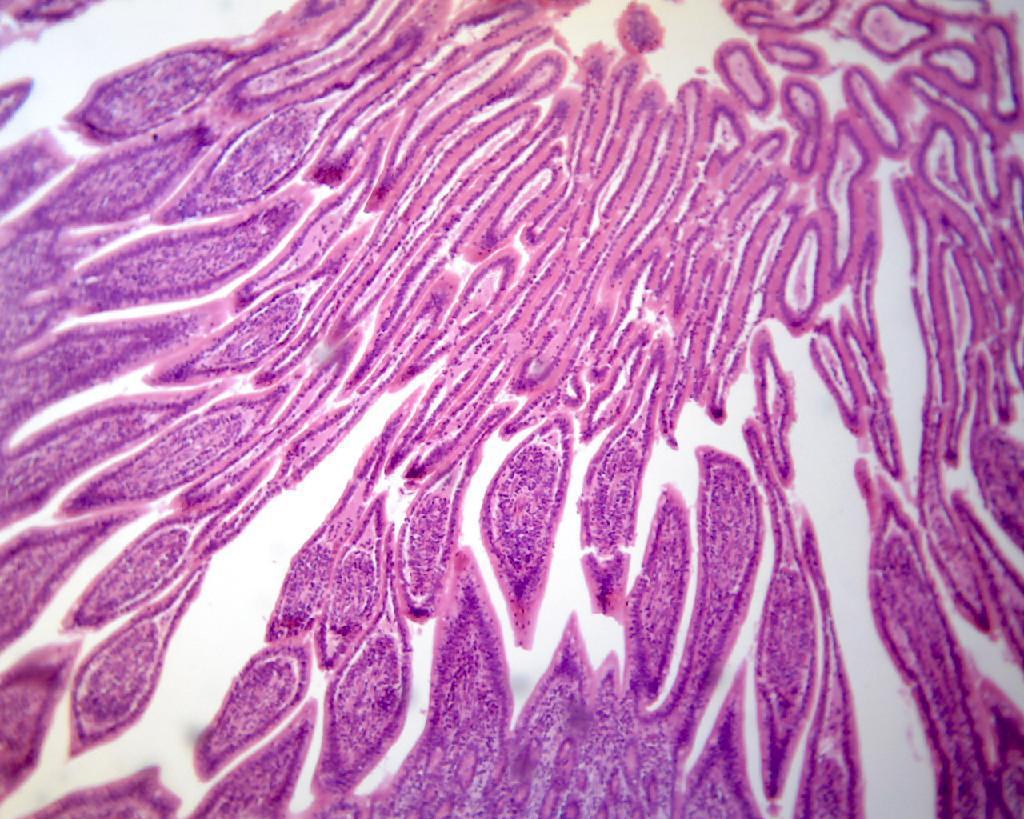 BestScope Binocular Digital Microscope BS-2010BD  3