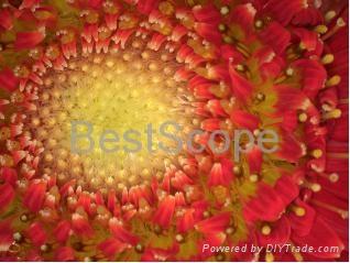 Bestscope Buc5c-1600c USB3.0 Digital Camera 3