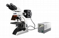 Hot sale BestScope BS-2072FB Fluorescent Biological Microscope