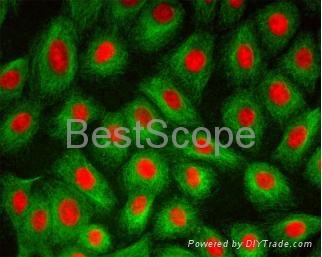BestScope BS-2072F Fluorescence Biological Microscope 3