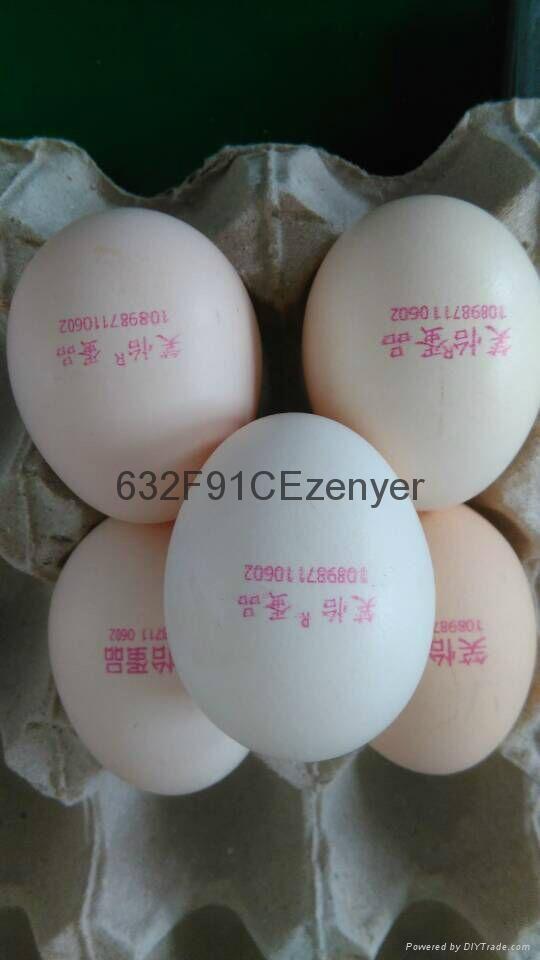深圳振野单头10000枚/小时高速鸡蛋喷码机 2