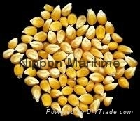 Dried Yellow Maize