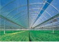 HONGBO PC transparent roofing tile 3