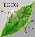 EGCG 1