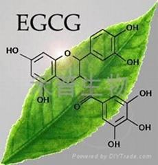 (-)-表沒食子儿茶素沒食子酸酯EGCG單體