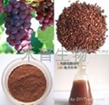 Grape Seed Extract 95% 2