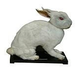 兔外形標本