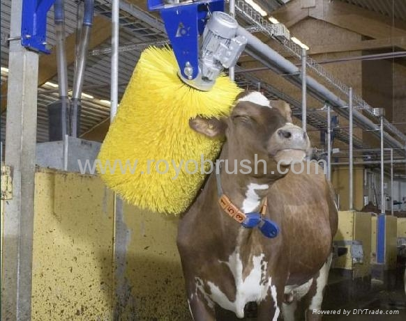 Roller Brush For Cow Cleaning China Manufacturer Other