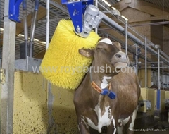 roller brush for cow cleaning
