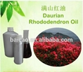 Daurian rhododendron oil