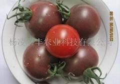 進口黑番茄種子