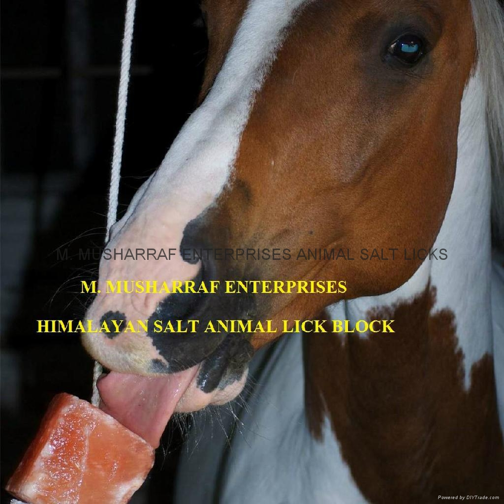 ANIMAL LICKING NATURAL SALT 1