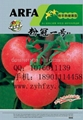 各类番茄种子大全