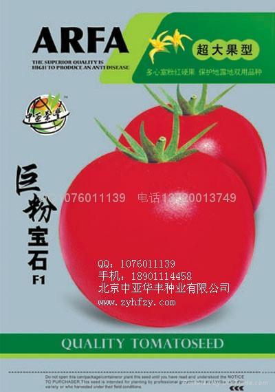 巨粉番茄种子 1