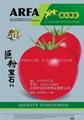 巨粉番茄種子