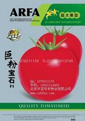 巨粉番茄种子