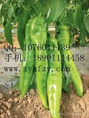 西洋牛角椒种子