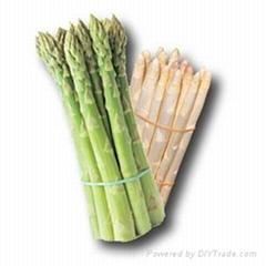 山西蘆筍種子產品