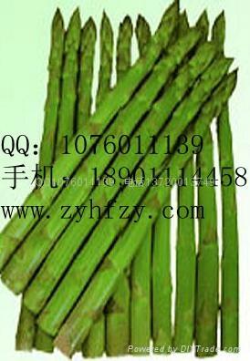 帝王蘆筍種子 1