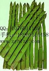 帝王蘆筍種子