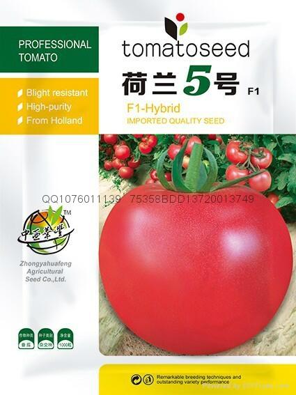 抗线虫番茄种子荷兰5号 1