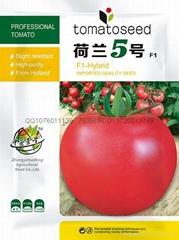 抗線虫番茄種子荷蘭5號