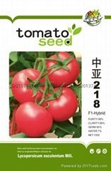 硬果番茄種子中亞218