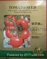 安莎迪番茄种子产品