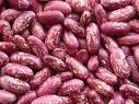 Purple Speckled Kidney Bean