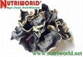 Black Fungus mushroom 2