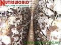 Black Fungus mushroom 5