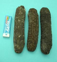 Sea Cucumber B