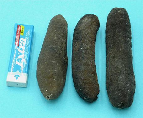Sea Cucumber D