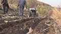 MINI HILL SIDE FARMING TRACTOR