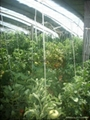 GREEN HOUSE for Vegetables