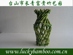 lucky bamboo---vase
