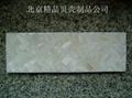 decorative shell  tile