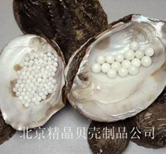 白色珍珠核